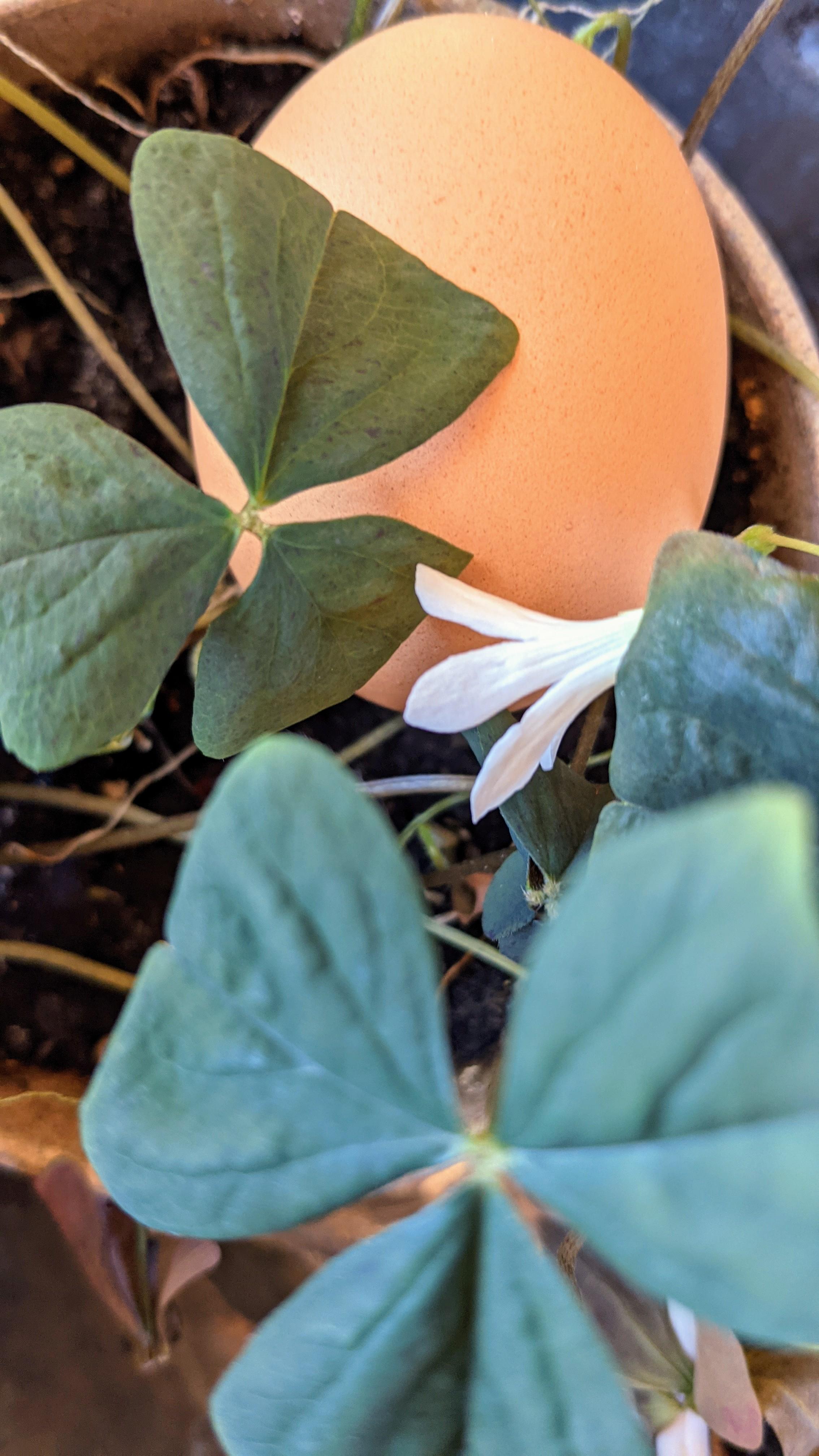 Egg of Spring
